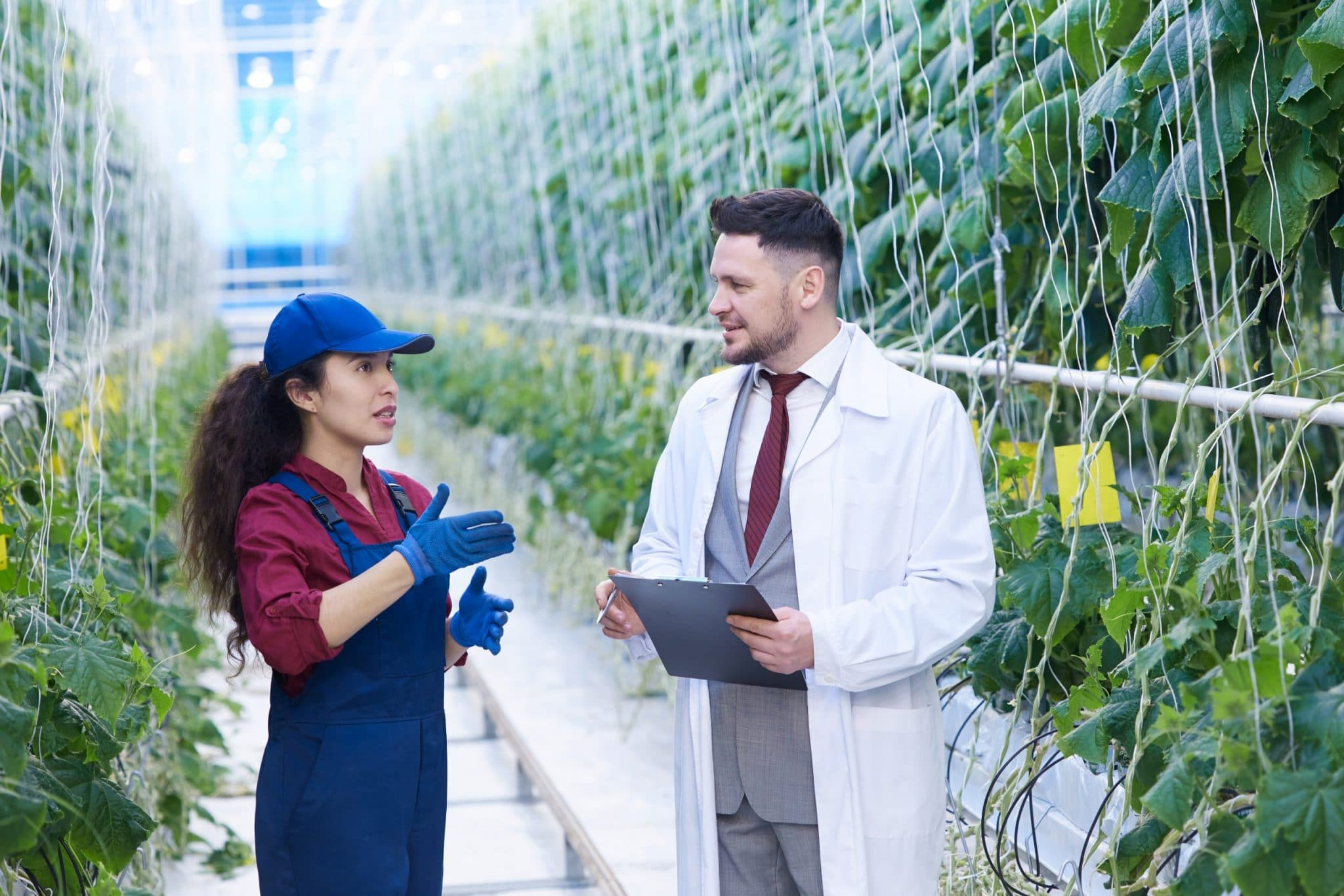 Portrait of handsome agriculture scientist talking to young woman working in greenhouse of modern vegetable farm